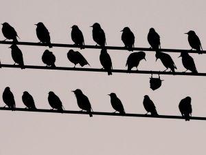 upside-down-bird_18378_990x742