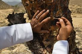 frankincense removal from tree